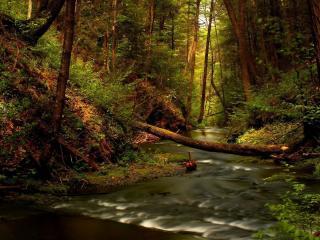 обои Ручей в лесу дремучем фото