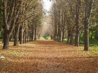 обои ровные ряды деревьeв фото
