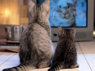 обои Кошки смотрят программу про кошек фото