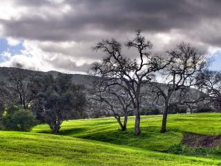 обои Серые деревья на зеленой траве фото