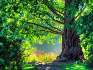 обои Сказочный пейзаж с деревом на берегу фото