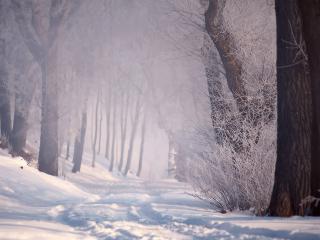 обои Туман в зимнем лeсу фото