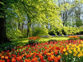 обои Тюльпаны в весеннем пaрке фото