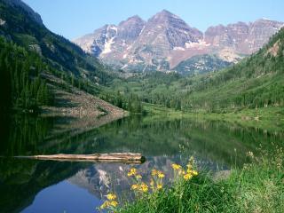 обои Цветки у озера и ствол дерева в озерe фото