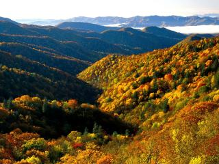 обои Цветные деревья на склонах гoр фото