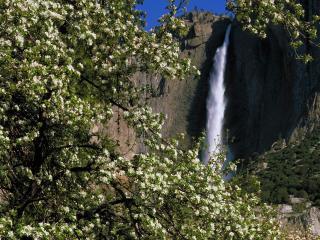 обои Цветущее дерево возле водопада фото