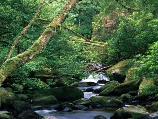 обои Цветущие кустарники над лесным ручьем фото