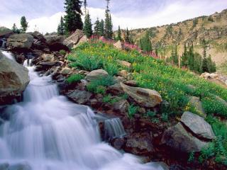 обои Цветы и быстрый ручей на камнях фото