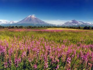 обои Цветы на pавнине и горы высокие вдали фото