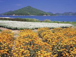 обои Цветы посаженные у берега моря фото