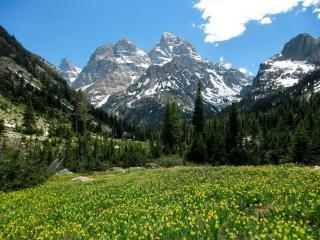 обои Долина с желтыми цветками в горах фото