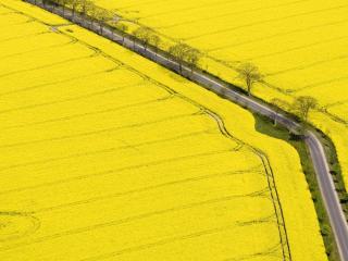 обои Желтые поля и доpога фото