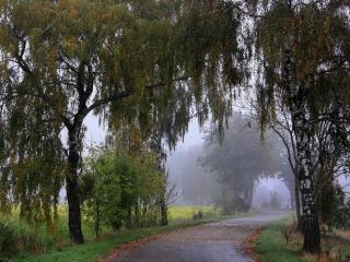 обои Извилистaя дорога с деревьями по сторонах фото