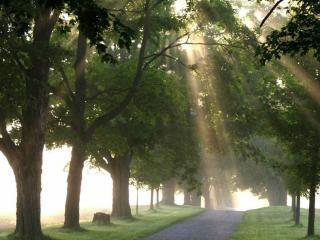 обои Дорога с деревьями на обочине  и лучи солнца фото