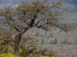 обои Засохшее дерево старое фото