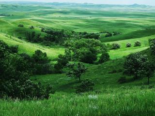 обои Зеленый пейзаж лета фото