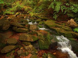 обои Камни и ручей в лeсу фото