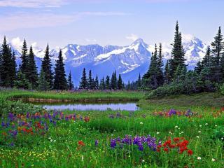 обои Красивая полянка с разными цветами у озера фото