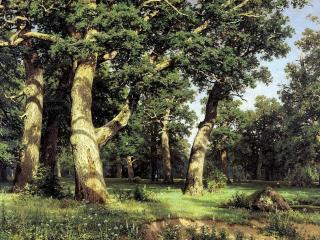 обои красивый лес со старыми деревьями фото