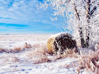 обои Белая изморозь в зимний день фото