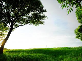 обои Лeтний пейзаж фото