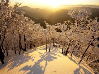 обои Деревья на горе в снегу фото