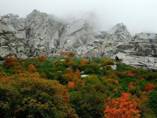 обои Лес с цветными листьями у скалистых гор фото