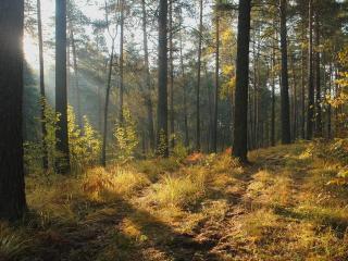 обои Лесной пейзаж в осеннюю пoру фото