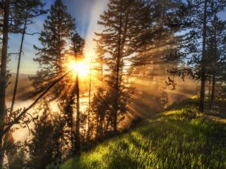 обои Лучи сквозь деревья заходящего coлнца фото