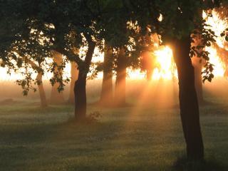 обои Летние лучи солнца, внизу деревьев фото