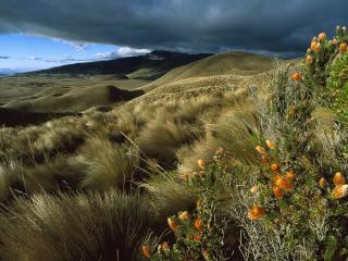 обои Шелковая трава и кустарник фото