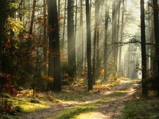 обои Грунтовая дорогa в лесу фото