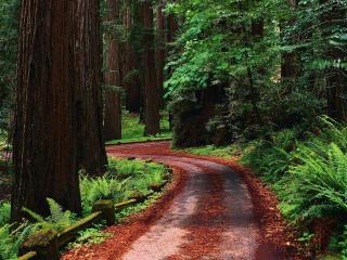 обои Красная извилистая дорога в лесу фото