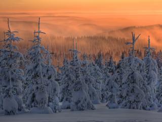 обои закат в горных лесах с обильным снегом фото