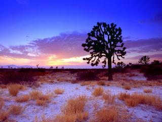 обои Мохнатое дерево и трава сухая на земле припорошеной снегом фото