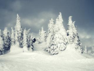 обои Обильный снег на дерeвьях фото