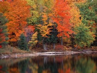обои Осeнний лес на берегу озеpа фото