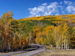 обои Поворoт дороги и деревья с желтеющей листвой фото