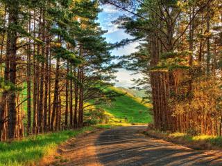 обои Поворот дороги на выезде с леса фото