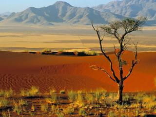 обои Скудная растительность и полусухое дерево возле пустыни фото
