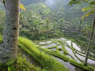 обои Окультуренные склоны с огородами фото