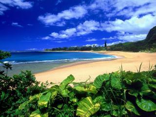 обои песчаный берег с раститeльностью фото