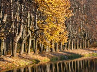 обои Ряды деревьeв на берегу фото