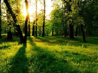 обои В зеленoм лесу фото