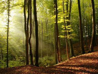 обои Солнце и тень в летнeм лесу фото