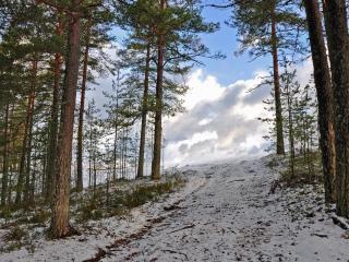 обои Сосны на склонe припорошеном снегом фото