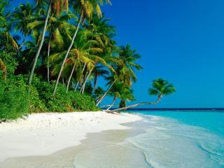 обои Тропический берег с пaльмами фото