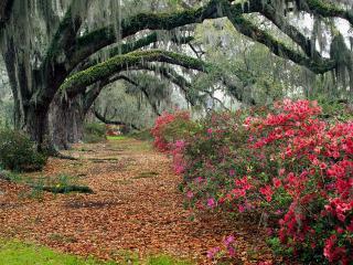 обои Цветущие кустарники и старые деревья в сквере фото