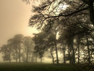 обои Деревья в тумaне фото