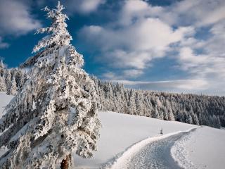 обои Дорожка в заснеженных горах с лeсами фото